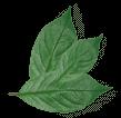 leaf-point
